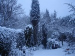 Gardening in the Winter